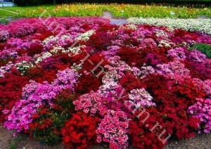 01-flowerbed